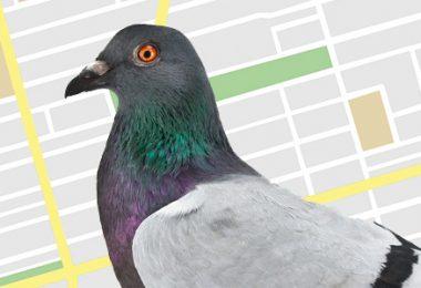 Google-maps-pigeon-update-Techblogcorner